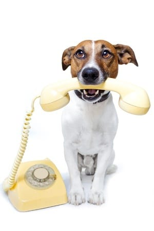 11993934 - dog on the phone
